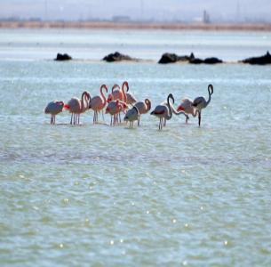 Meyghan Lake -